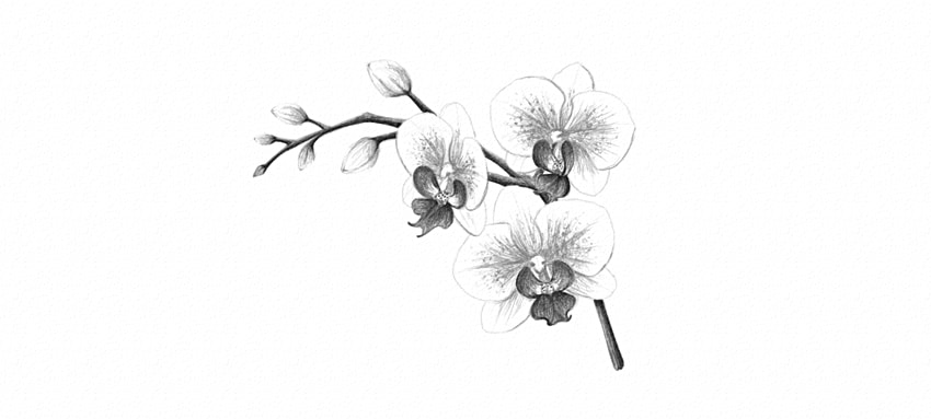 how to darken orchid pattern