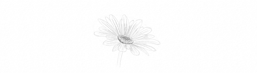 how to shade diasy petals with hard pencil