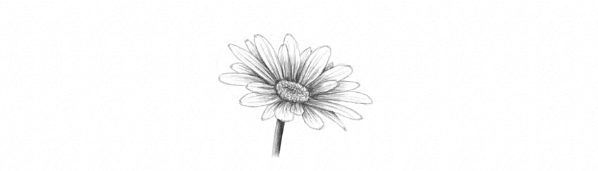 how to shade daisy petals dark