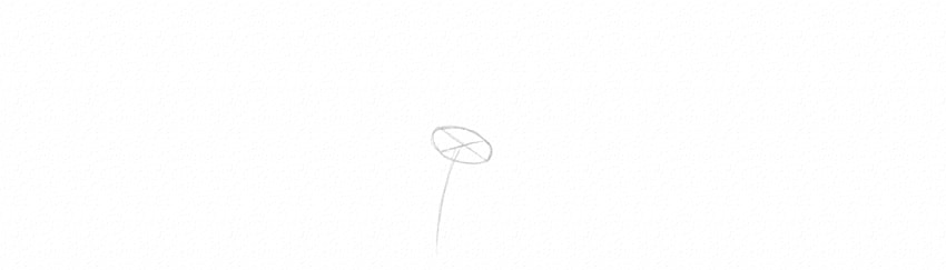 how to draw daisy disk whole