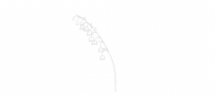 lily of the valley stem details drawing