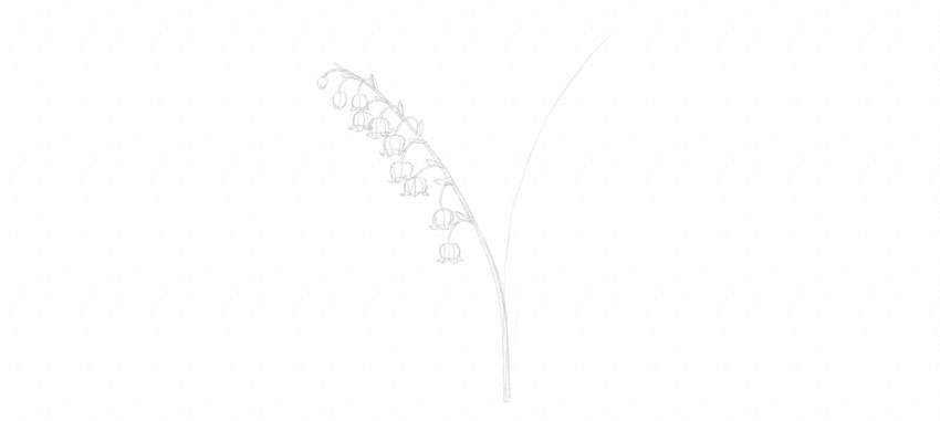 draw  lily of the valley leaves