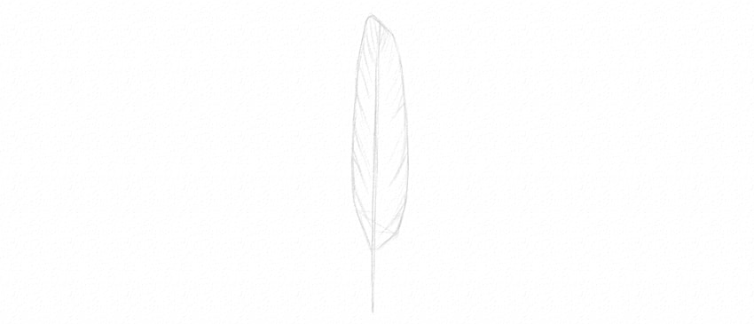 how to draw feather barbs