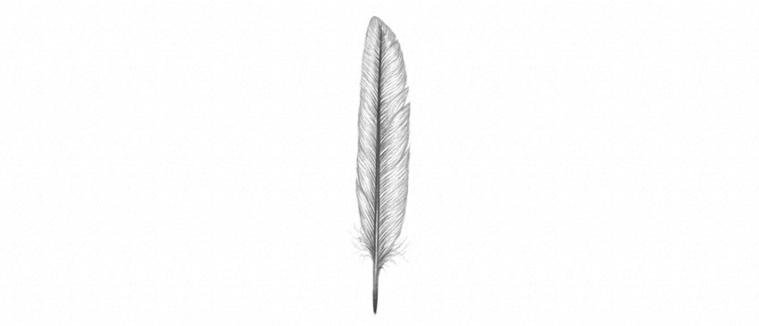 how to draw detailed feather