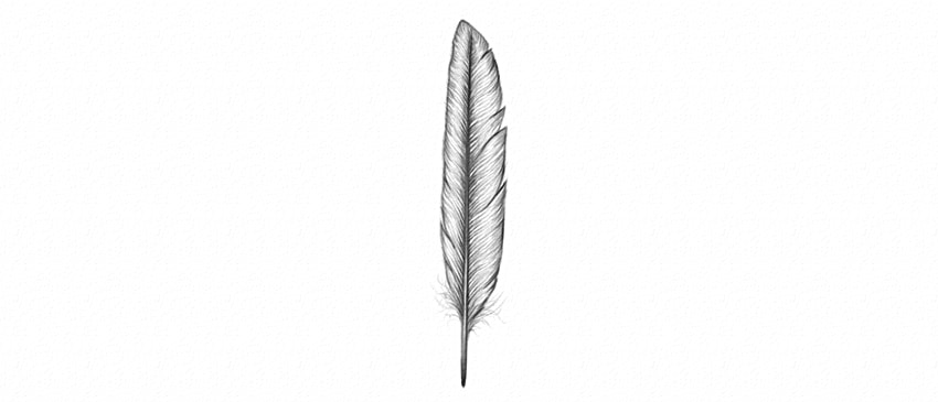 how to draw a semi realistic feather