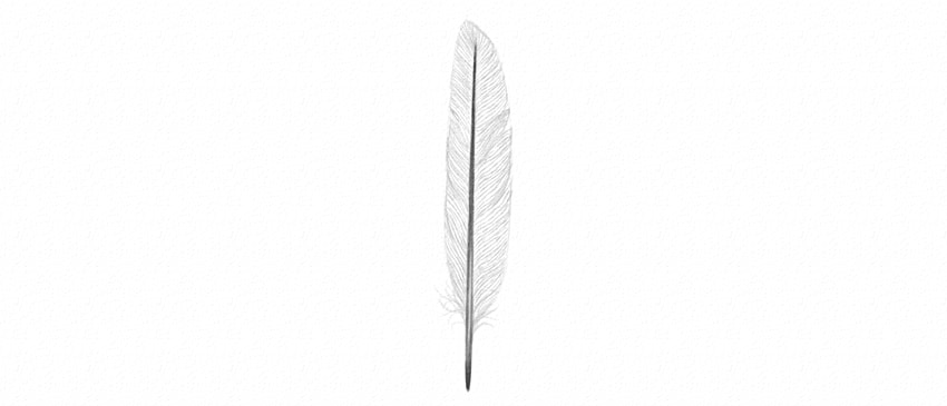 how to draw feather barbs with pencil