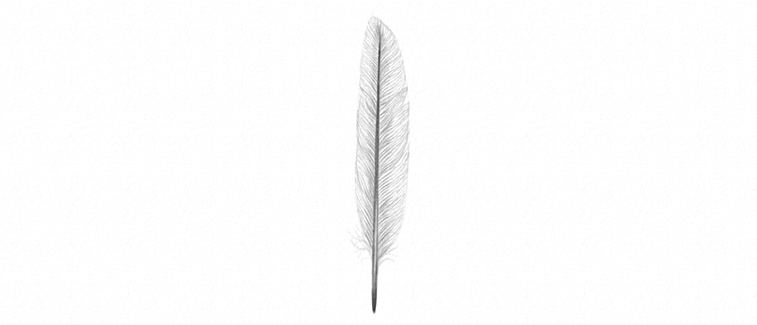 how to shade feather vane with pencils