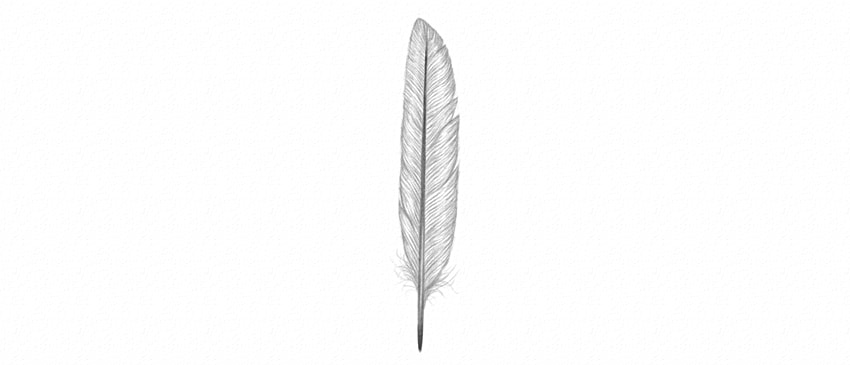 how to shade feather in detail