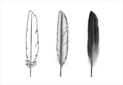 how to draw feathers. Black Bedroom Furniture Sets. Home Design Ideas