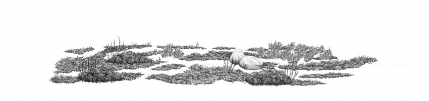 how to draw grass clusters with hard pencil