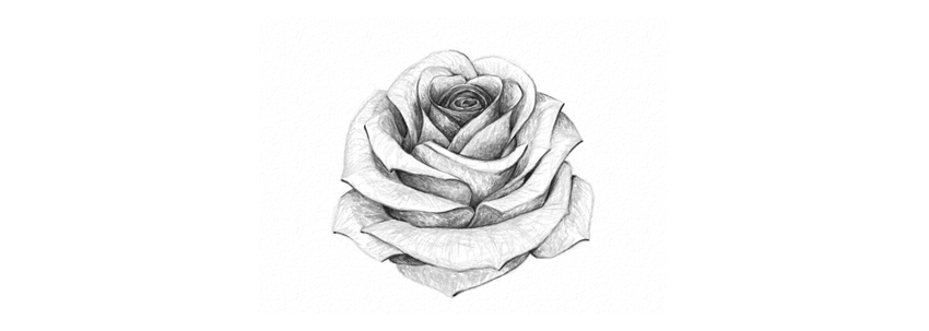 Drawing Pictures Of A Rose