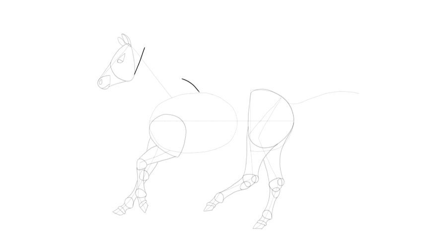 how to draw horse neck