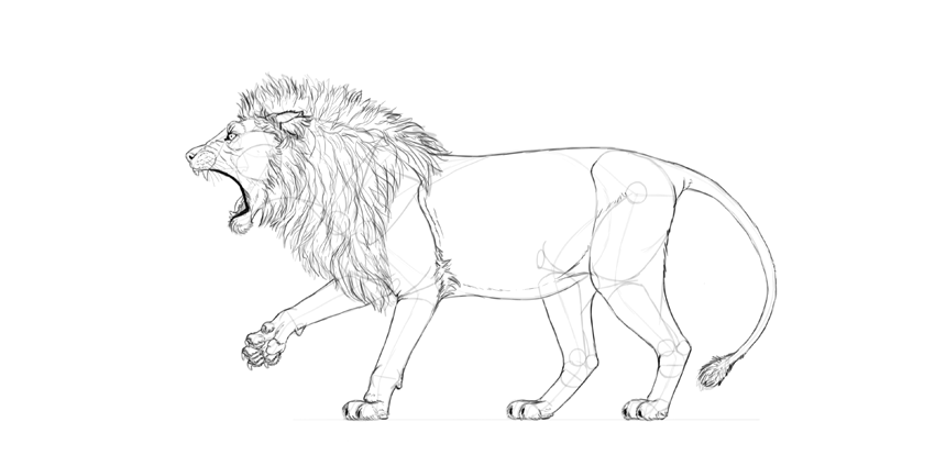 realistic lion drawing