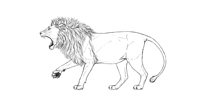 lion drawing clean