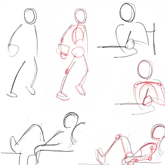 Human Anatomy Fundamentals Basic Body Proportions