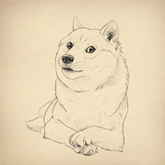 Design Such Tutorial Many Fun How to Draw Doge