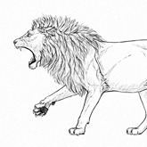 How to Draw a Roaring Lion Step by Step