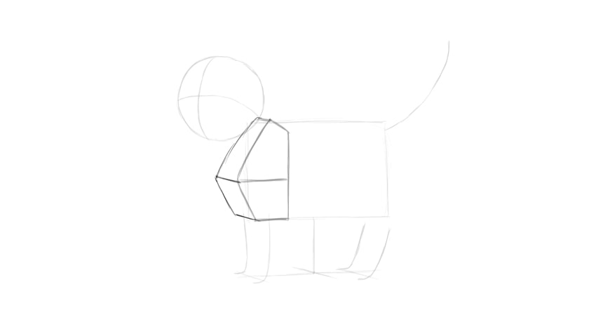 cat shoulders in perspective
