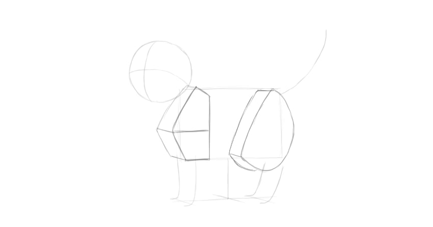 cat thigh in perspective