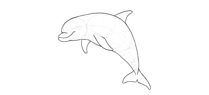 How to Draw a Dolphin Step by Step