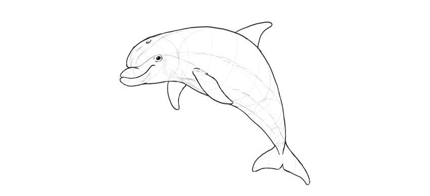 Line Art Dolphin : How to draw a dolphin step by
