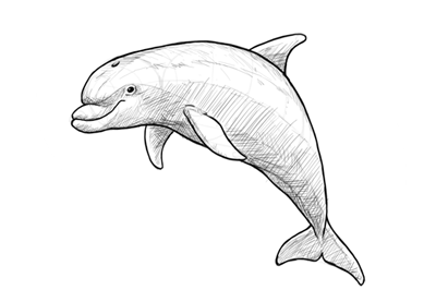 How to draw dolphin preview