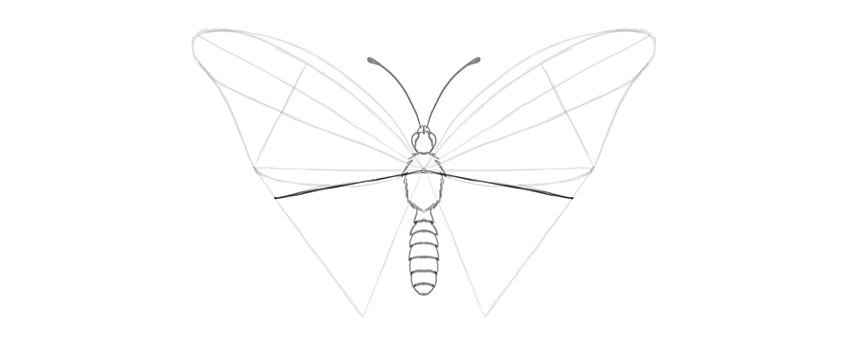 butterfly lower wing shape