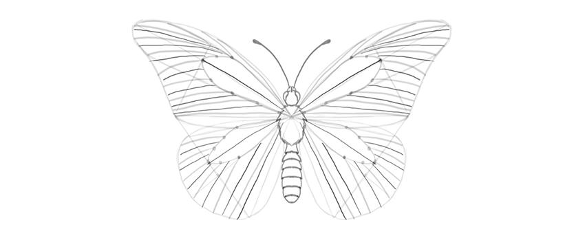 butterfly wing wrinkles