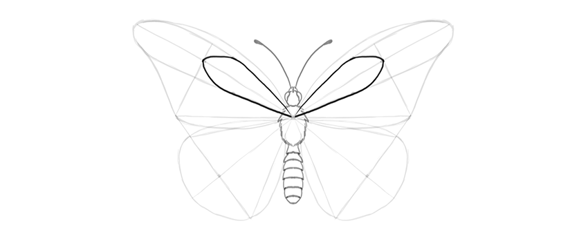 butterfly discal cell upper wing drawing