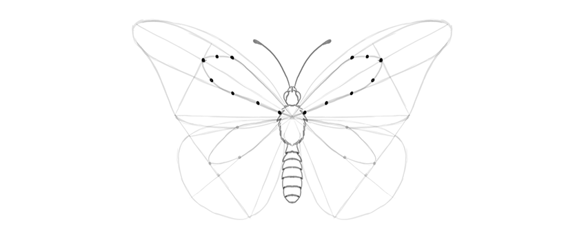 butterfly upper wing guide lines