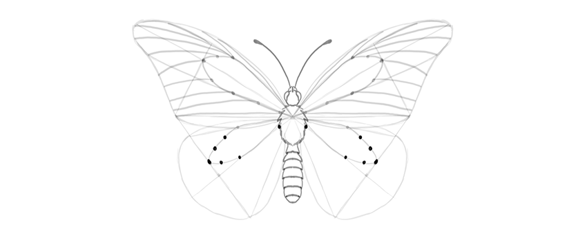 butterfly lower wing guide lines