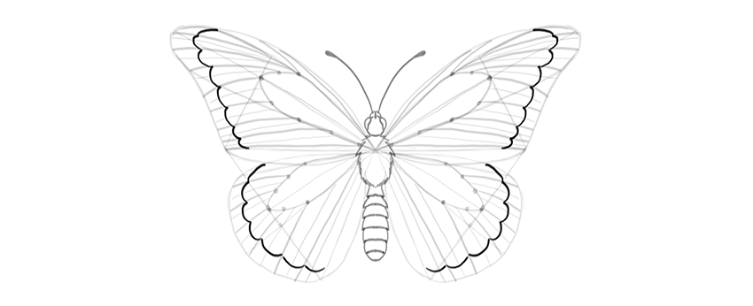 butterfly outer margin shape
