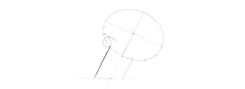 skull drawing jaw width