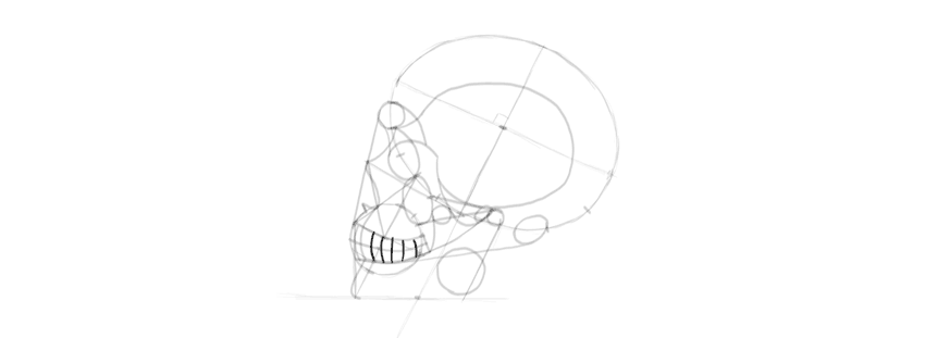 drawing skull nose back teeth