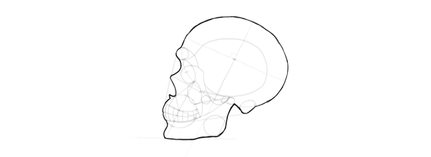 drawing skull outline