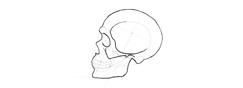 drawing skull side details