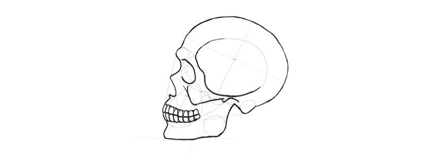 drawing skull jaws outline