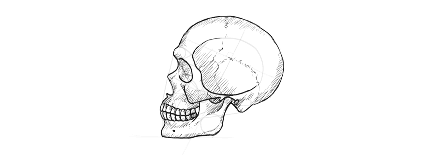 drawing skull cross hatching