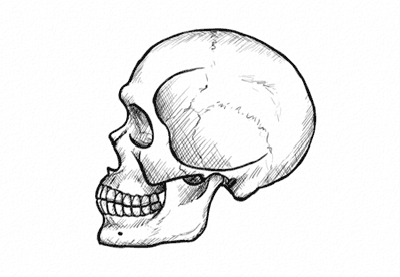 how to draw a skull in profile step by step