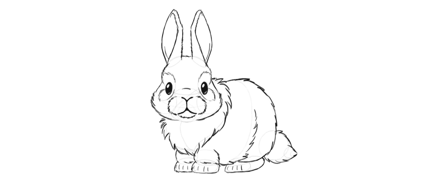learn how to draw a bunny step by step
