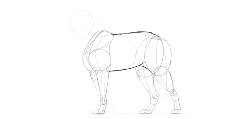 wolf drawing main body