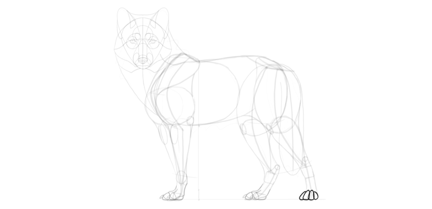 wolf drawing paw in perspective