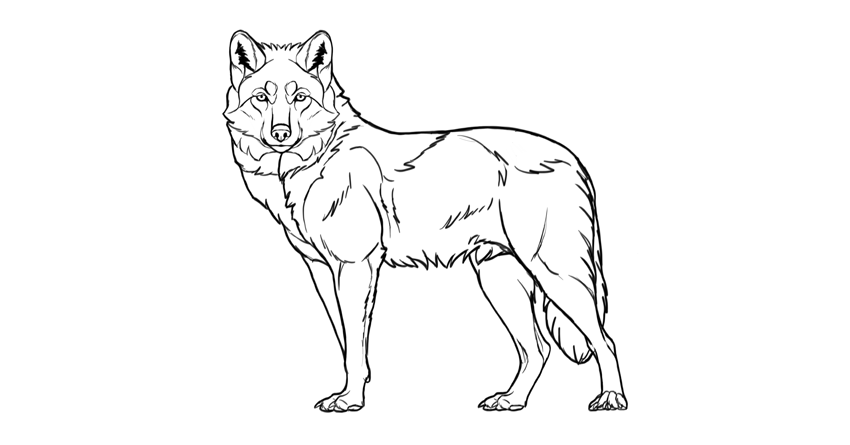 wolf drawing dark outline
