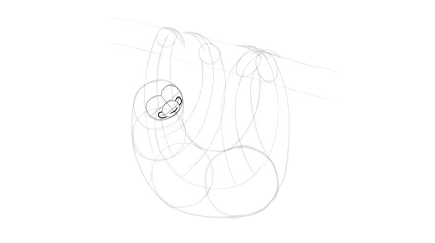 sloth smile detail