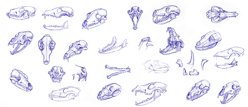 How to Use an Animal Skull for an Art Study