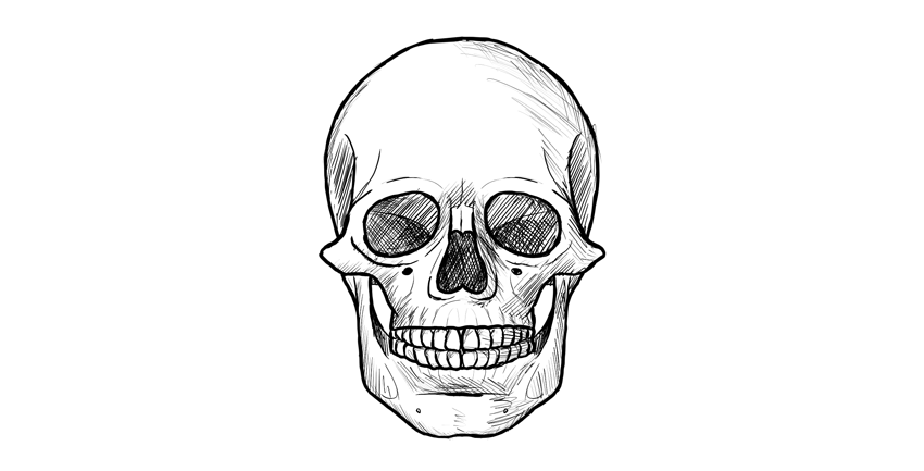 Drawing Skull Art Skull