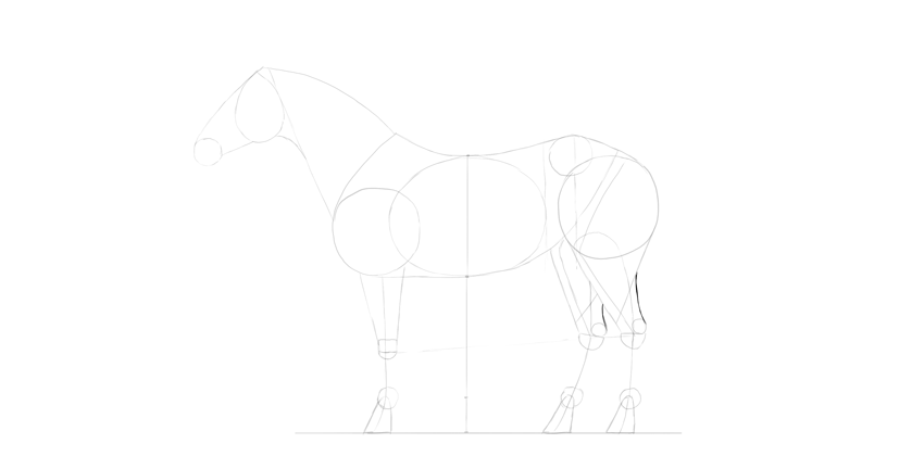 horse drawing achilles tendon