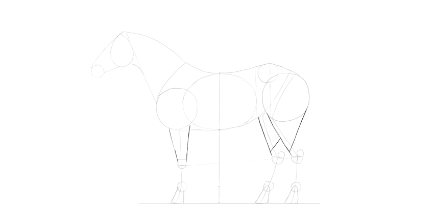 horse drawing foerarm calf