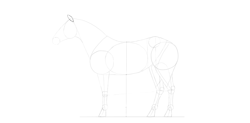 horse drawing ear shape