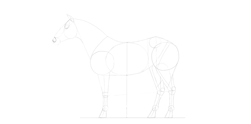 horse drawing nose shape